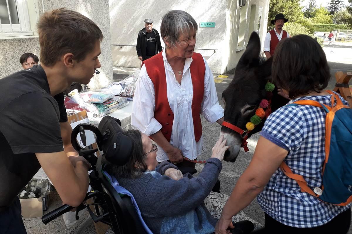 asinerie-badjane-mediation-grace-aux-anes-contact-avec-les-personnes-en-fauteuils-roulants