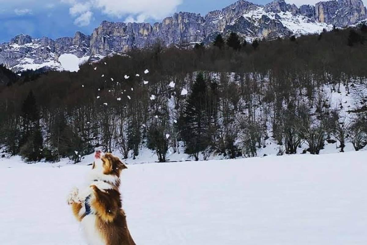 plateau-de-Sanchèse-Lescun-sous-la-neige