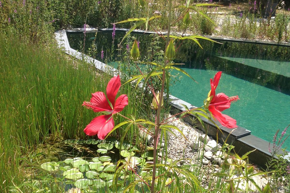 hibiscus d'eau villa les hespérides à grimaud golfe de saint-tropez