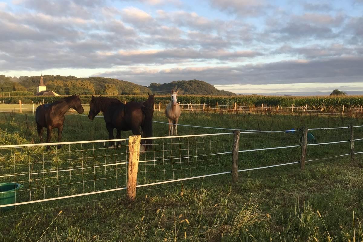 horses horse-riding