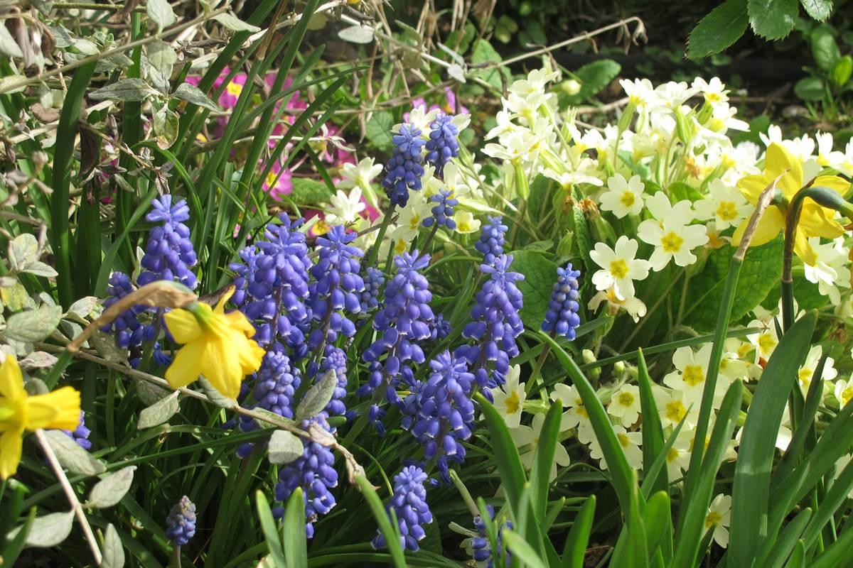 Aux 3 nids fleuris jardin