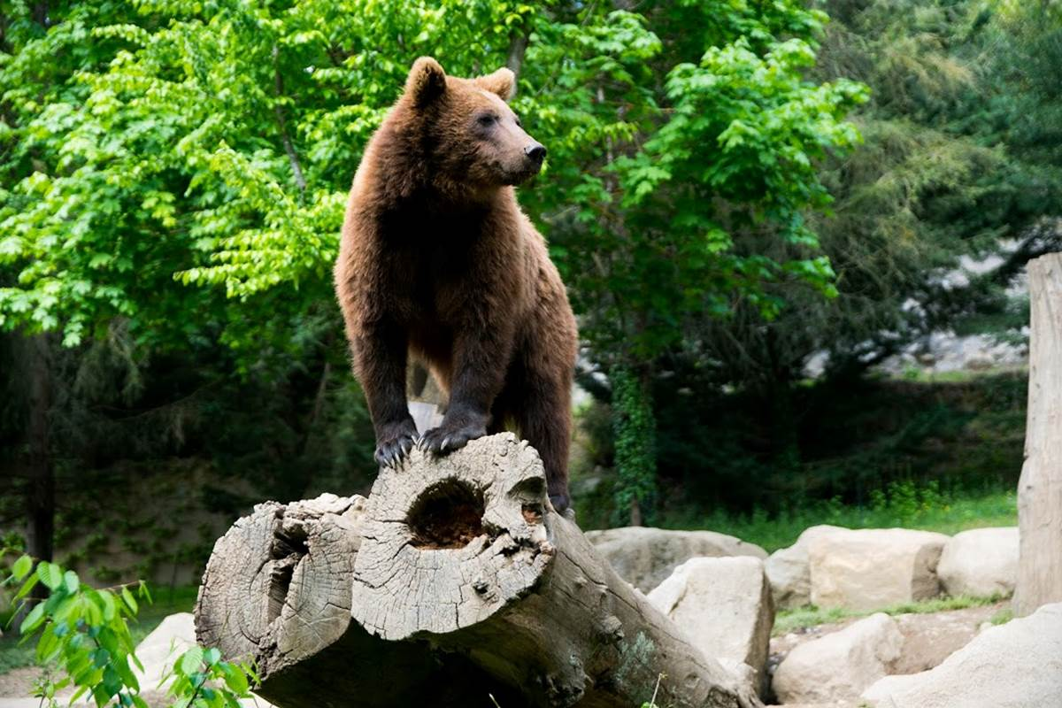 Parc animalier Argele`s-Gazost