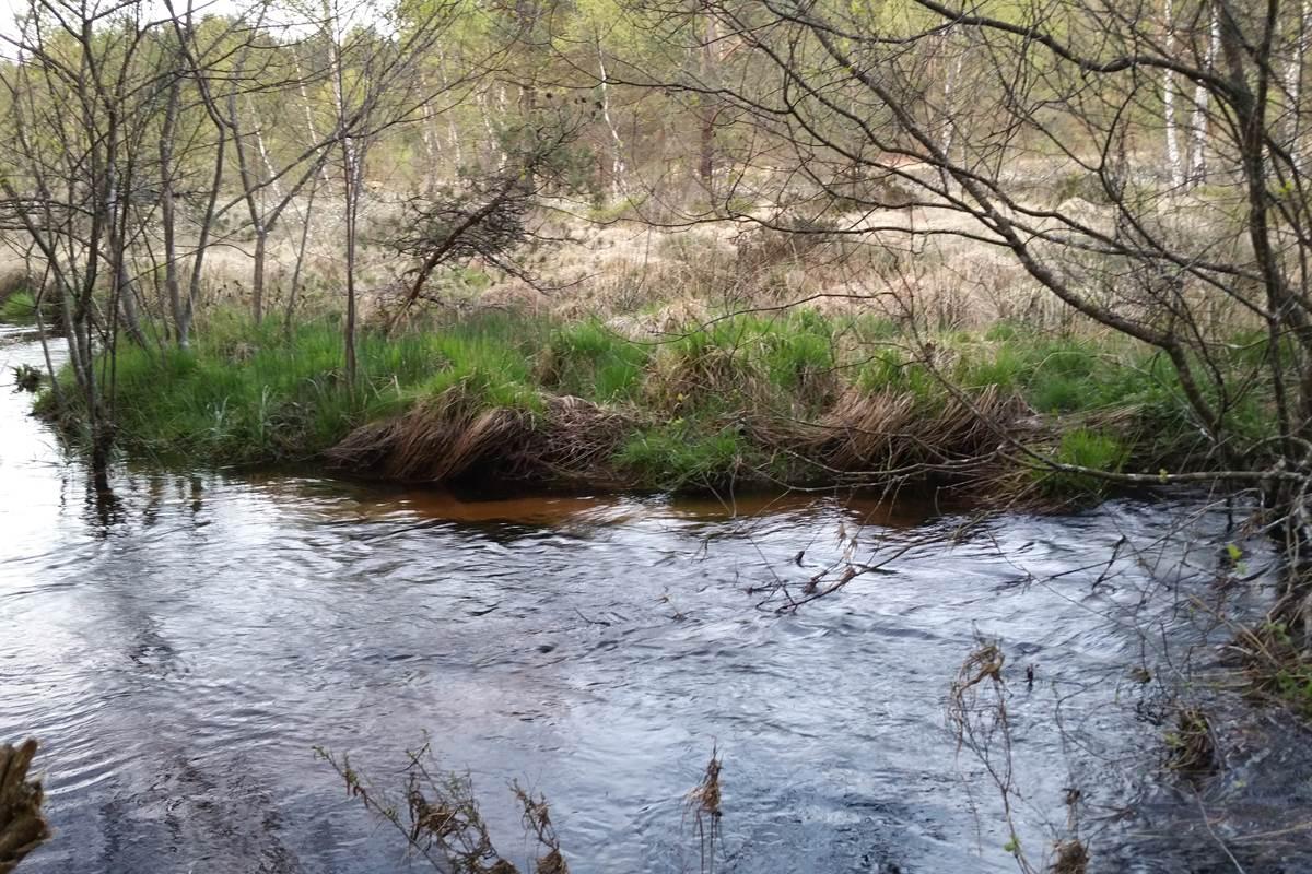 Ruisseau sauvage, gîtes à Royère de Vassivière