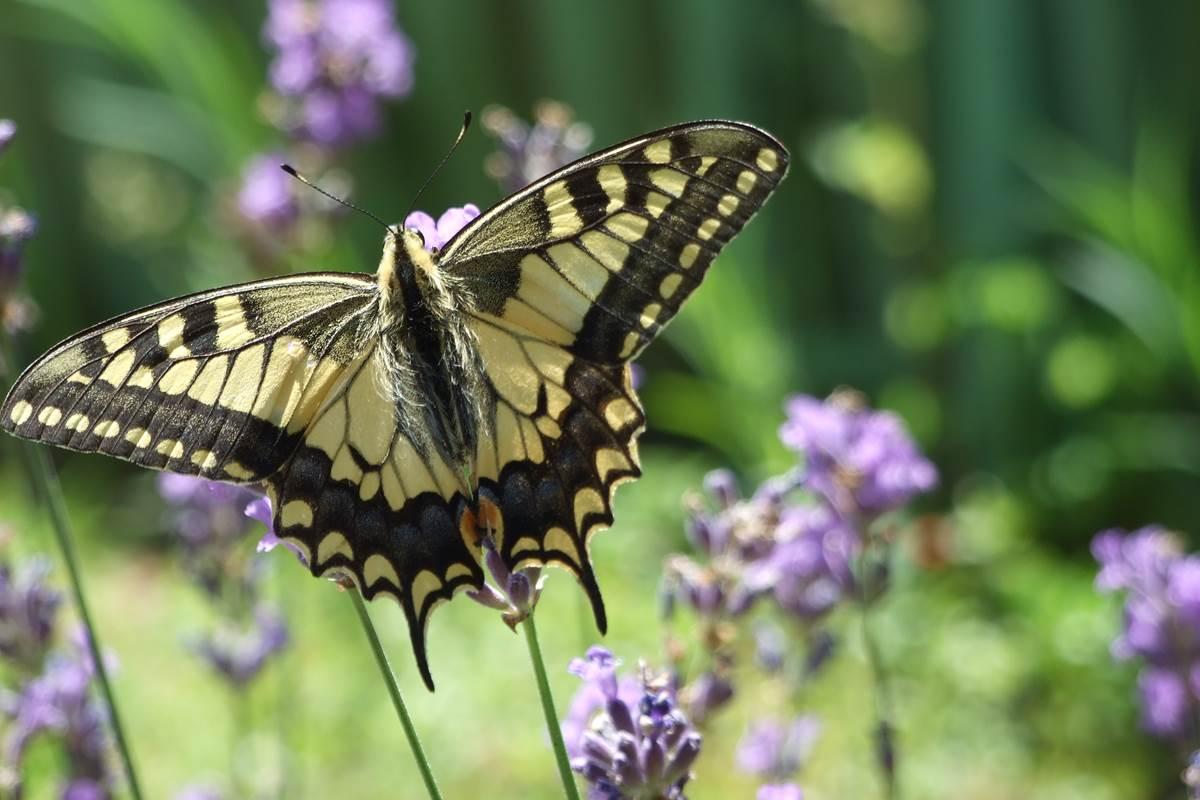papillon dordogne feuillantines bnb
