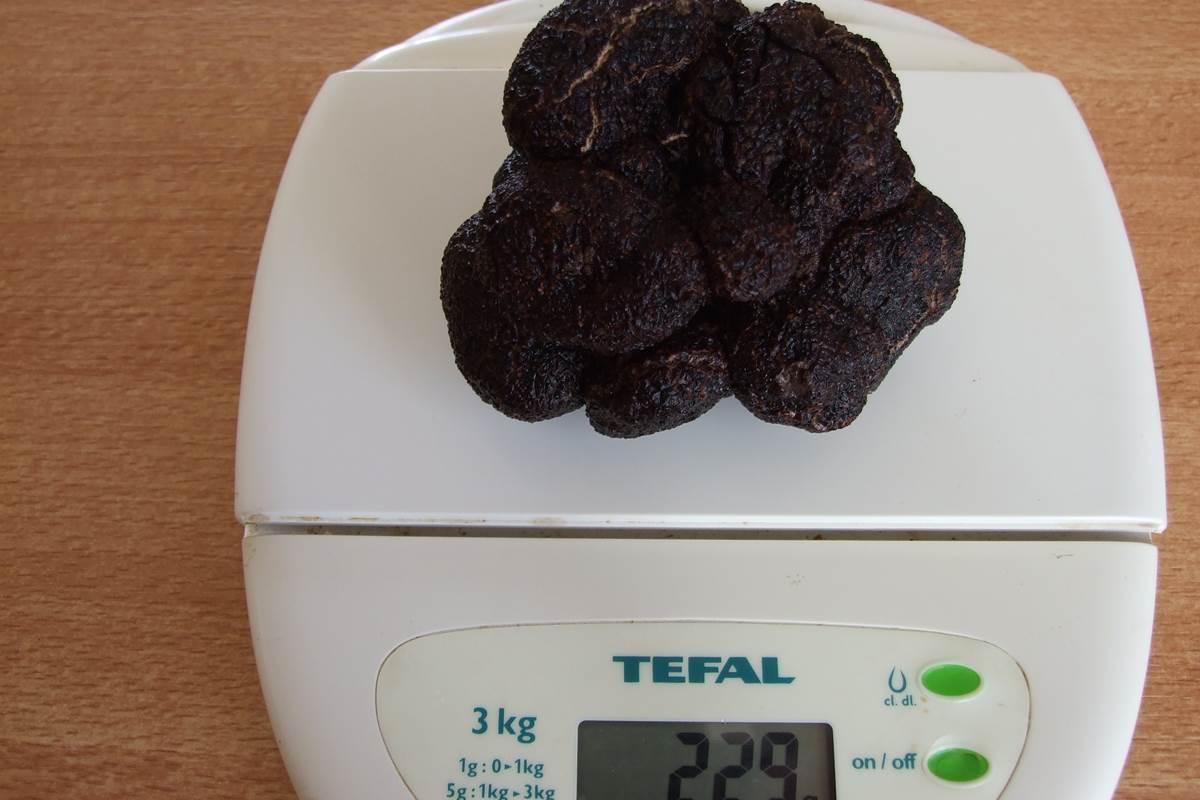 truffe noire dordogne Feuillantines