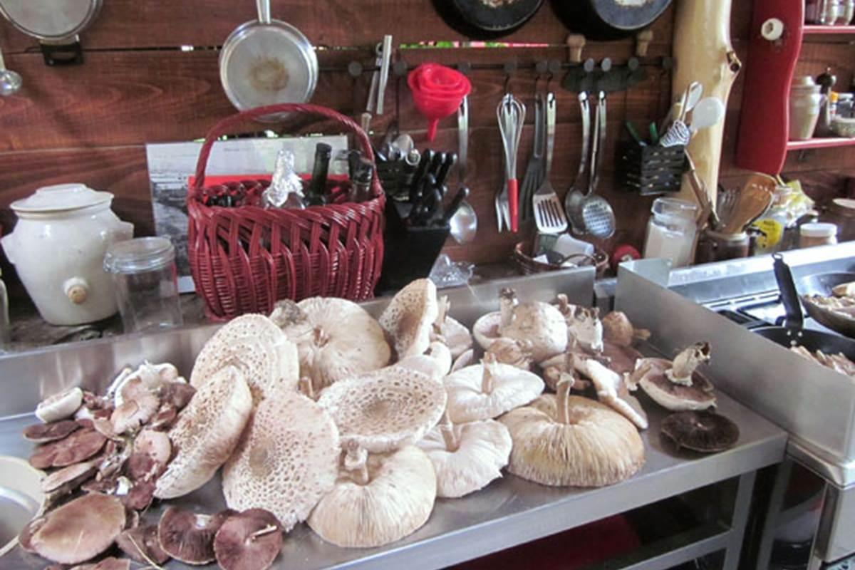 asinerie-badjane-hebergements-table-paysanne-recolte-de-champignons