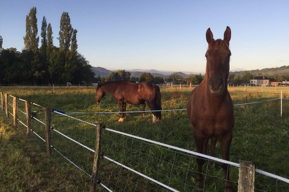 caballos y caballeros