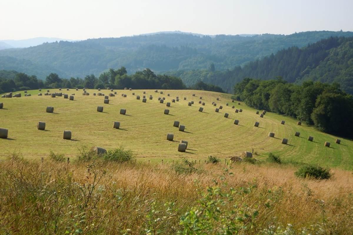 notre belle campagne, vue devant le Ranch des Lacs en été