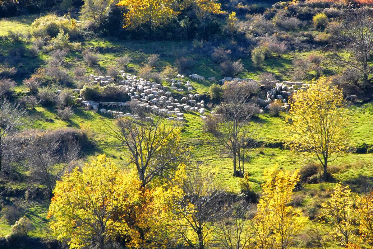 sudceven-pastoralisme