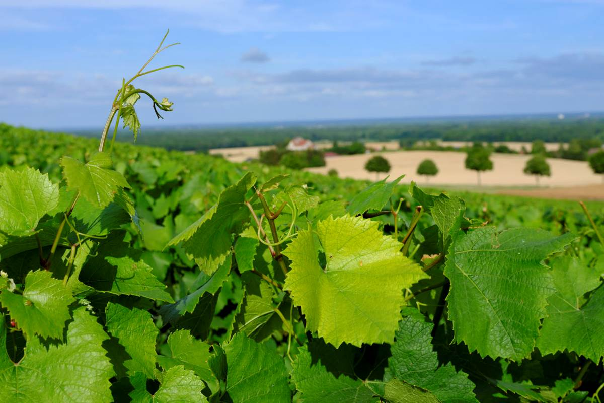 3-Terroir vignoble