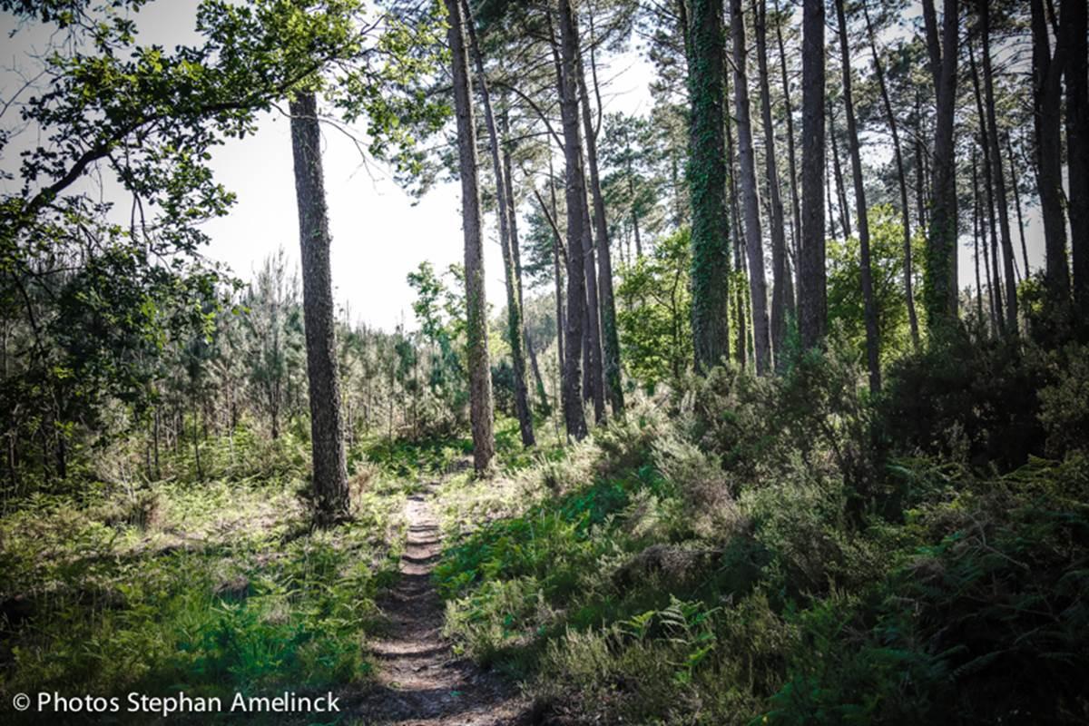 Sentier de randonnée le long du courant d'Huchet