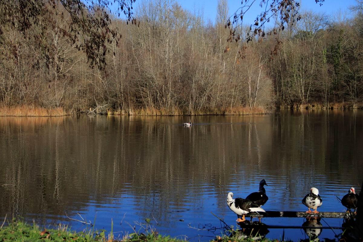 Barbaries sur l'étang