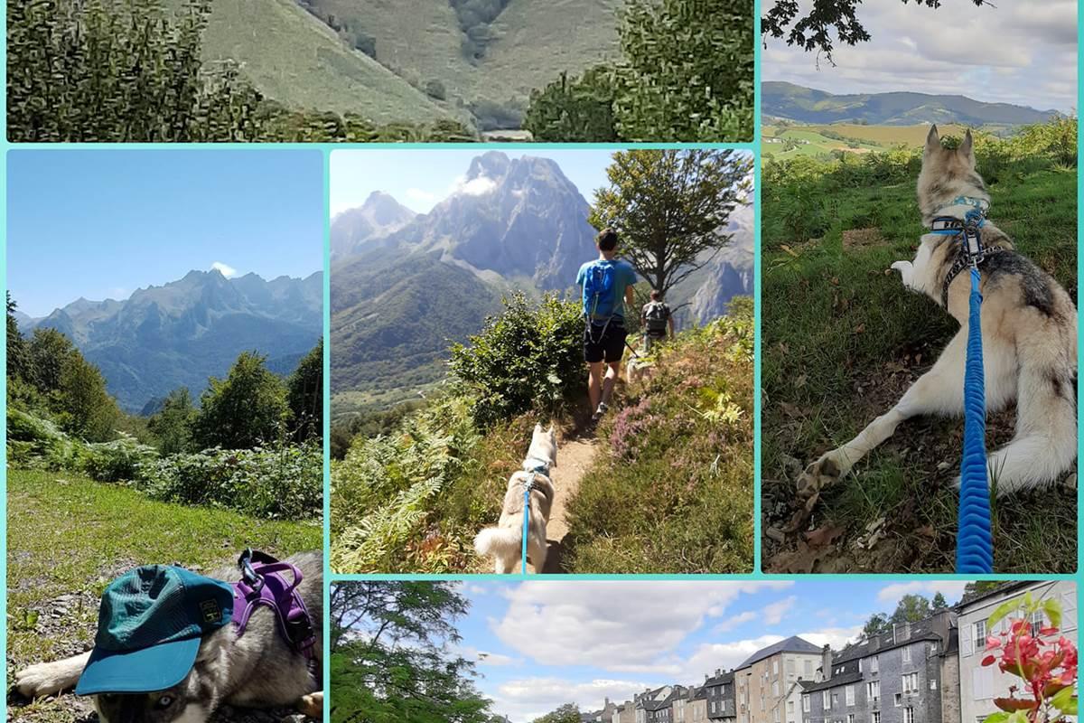 rando-Pyrénées-avec-des-chiens