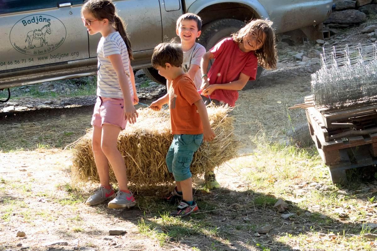 asinerie-badjane-sejour-etoile-les- soins-aux-animaux (3)