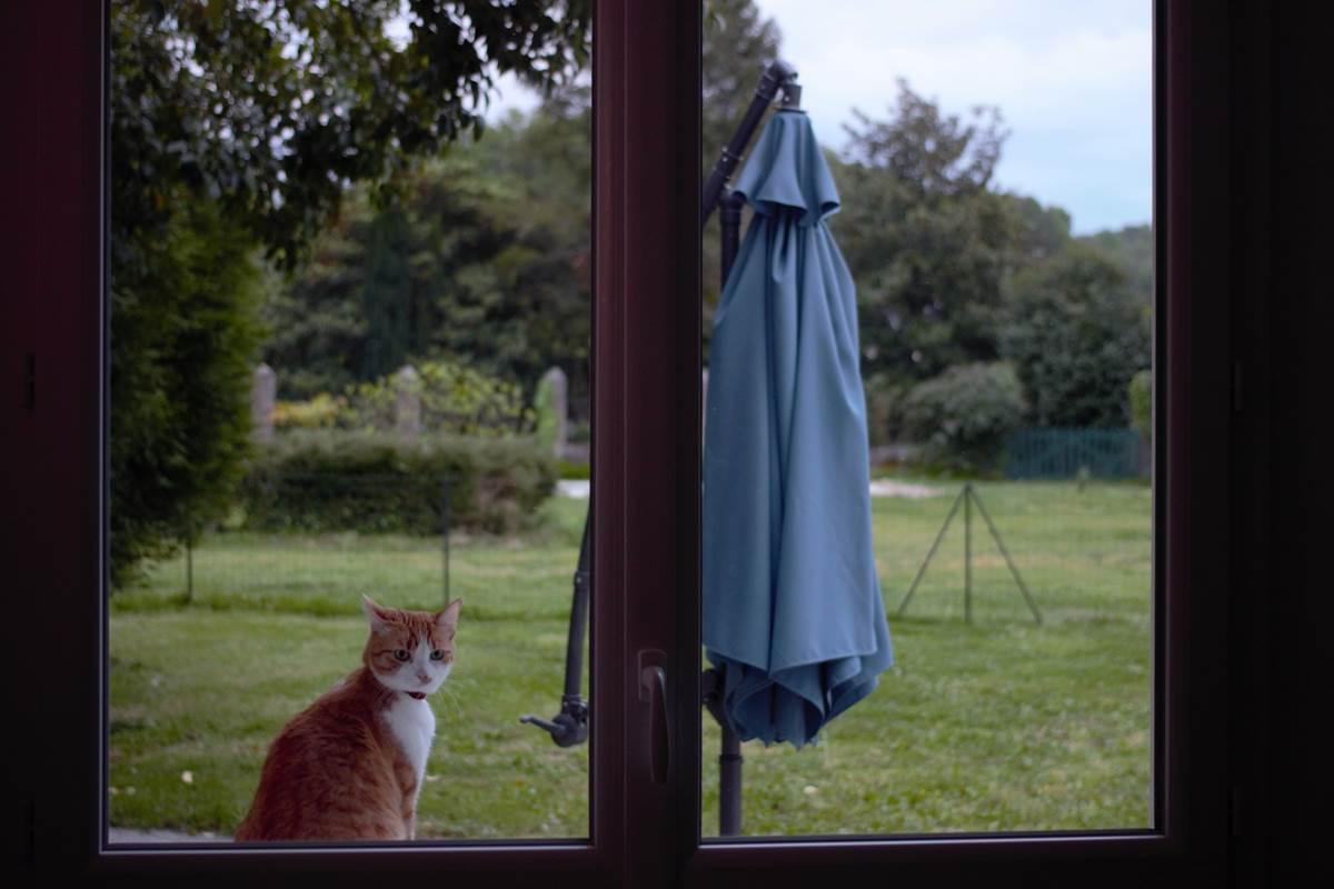 les chats aussi sont les bienvenus