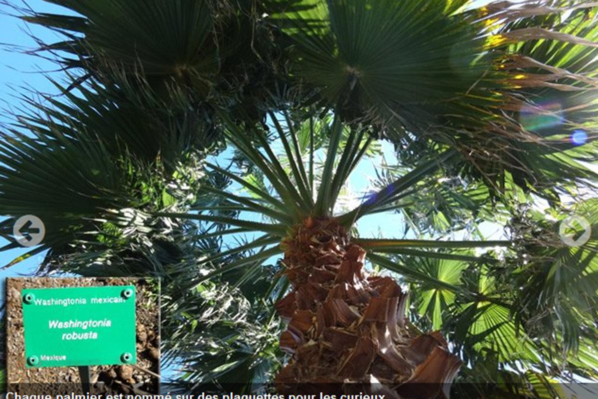 Screenshot-2018-3-26 Une agréable balade dans le Parc des Palmiers de Trois Mares(4)