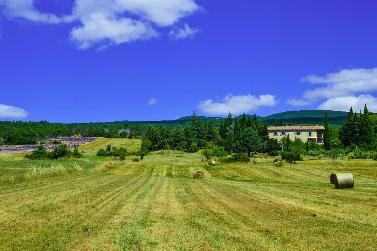 La Bastide du Claus 2020 et le champ de lavande