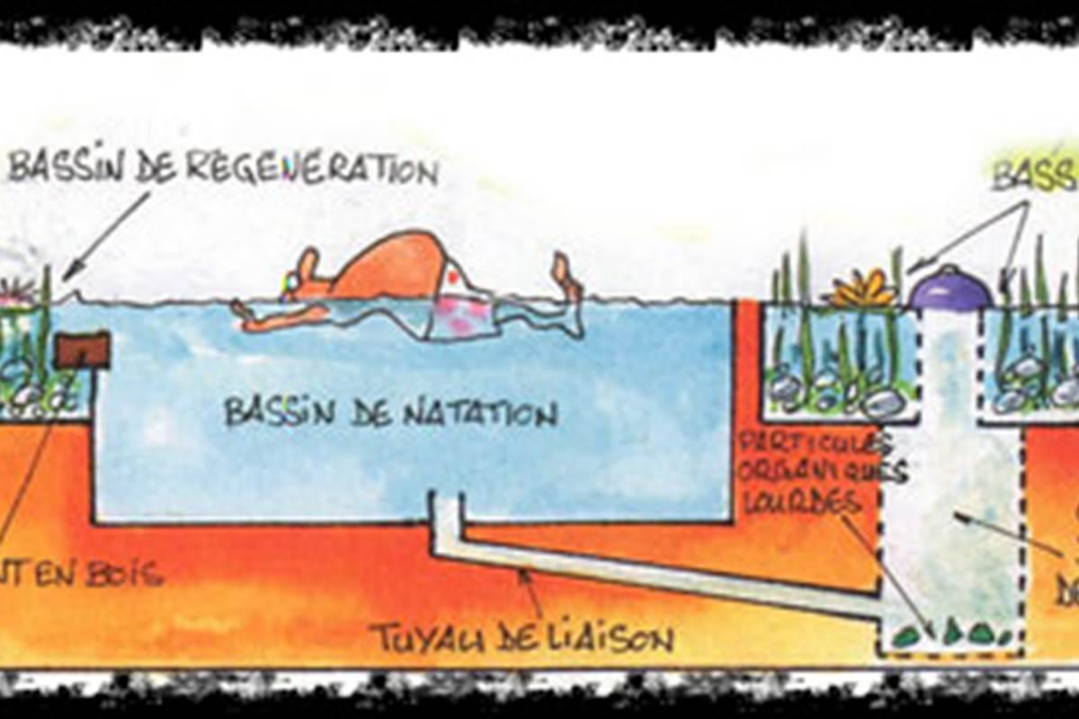 fonctionnement d'une piscine naturelle