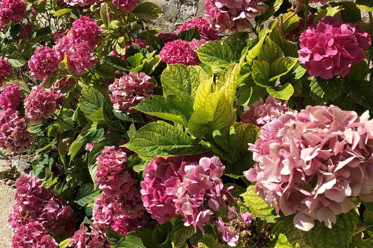 Le Clos Saint Lubin - Les fleurs