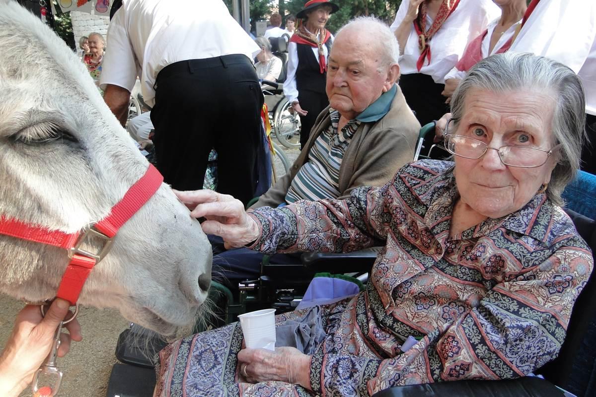 asinerie-badjane-mediation-grace-aux-anes-contact-avec-les-personnes-en-fauteuils-roulants (2)