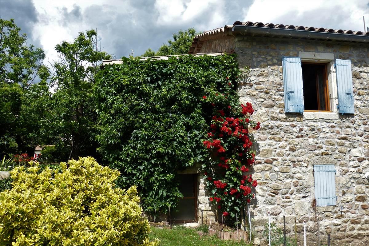 façade avec rosier etfusain