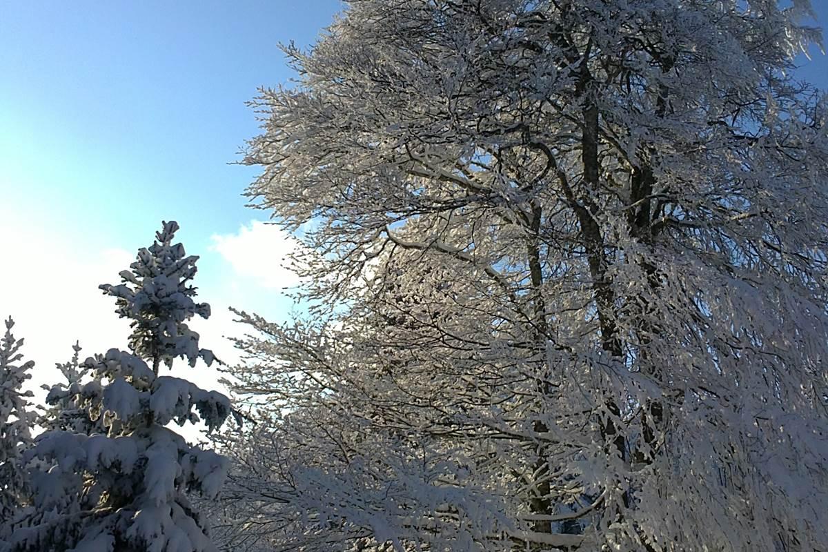 Soleil d'hiver dans le Monts de la Madeleine