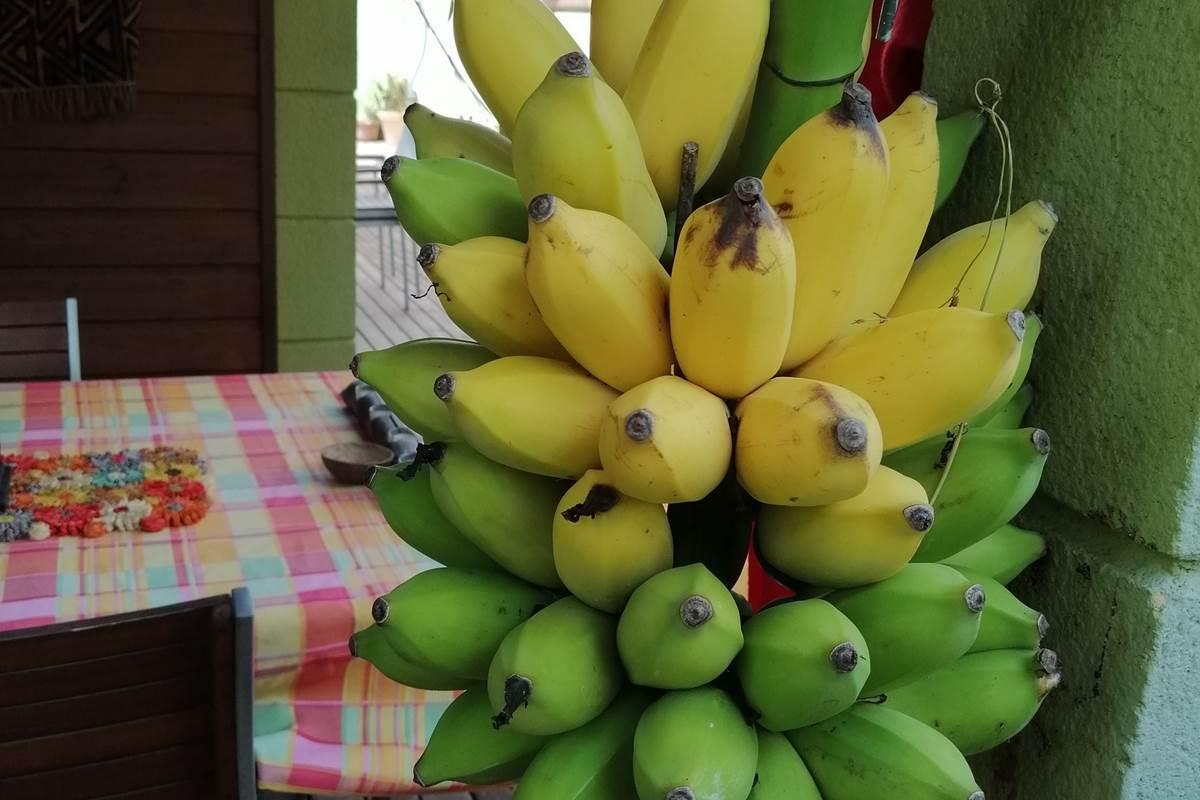 Les bananes du jardin