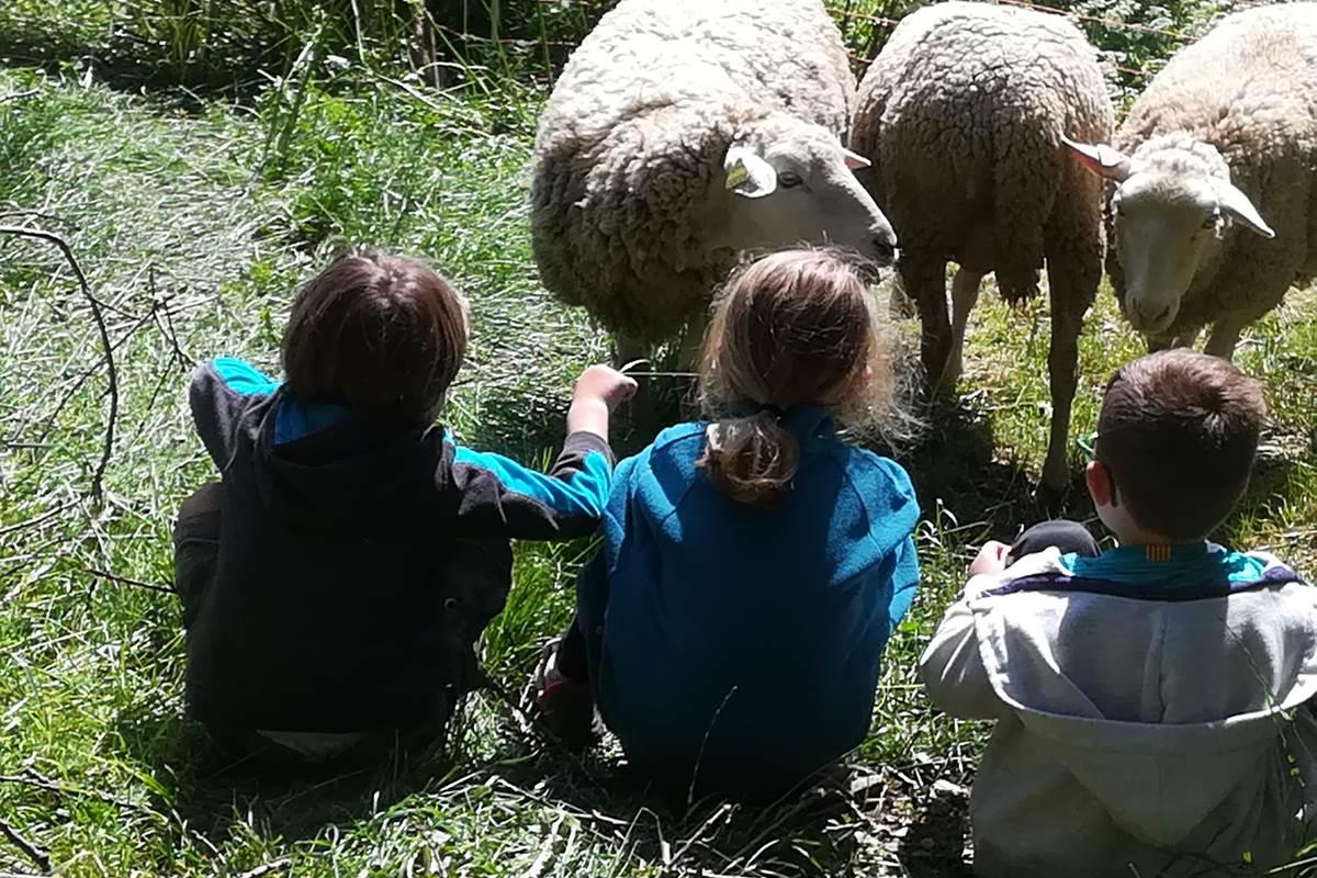 asinerie-badjane-activites-contact-avec-les-brebis
