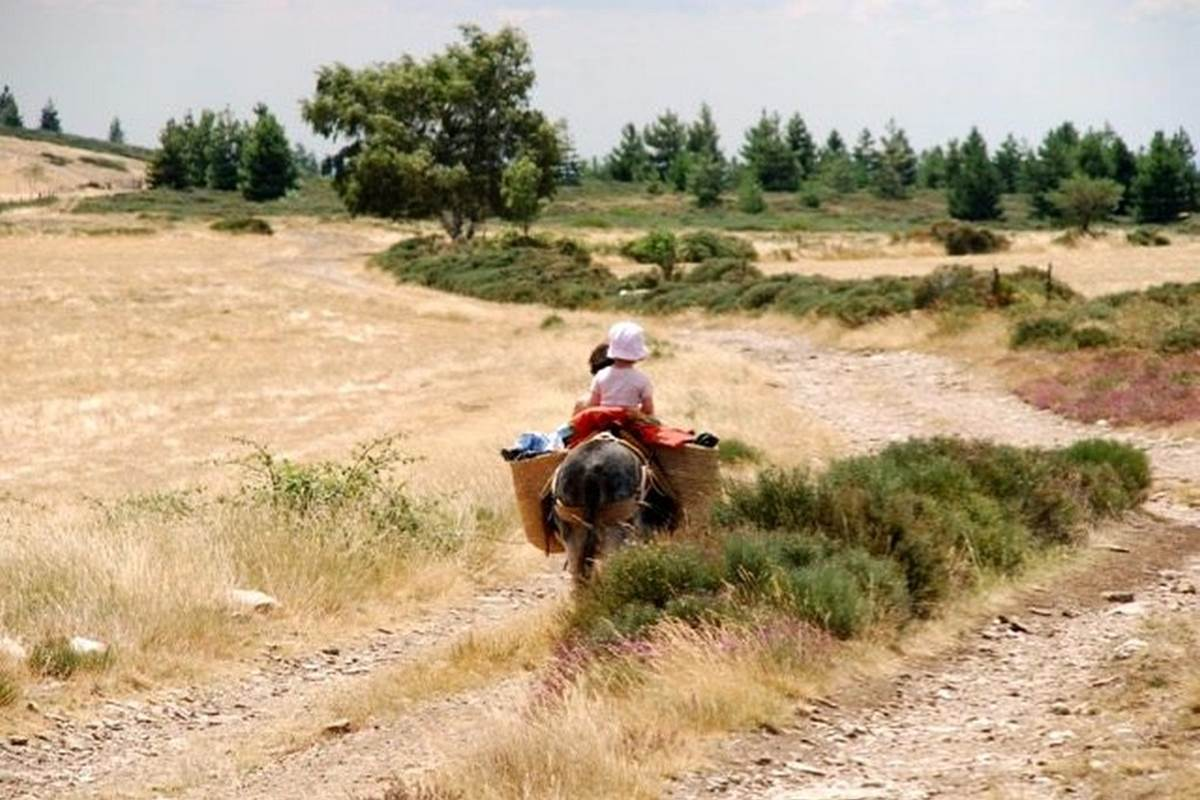 asinerie-badjane-seuls-sur-le-plateau