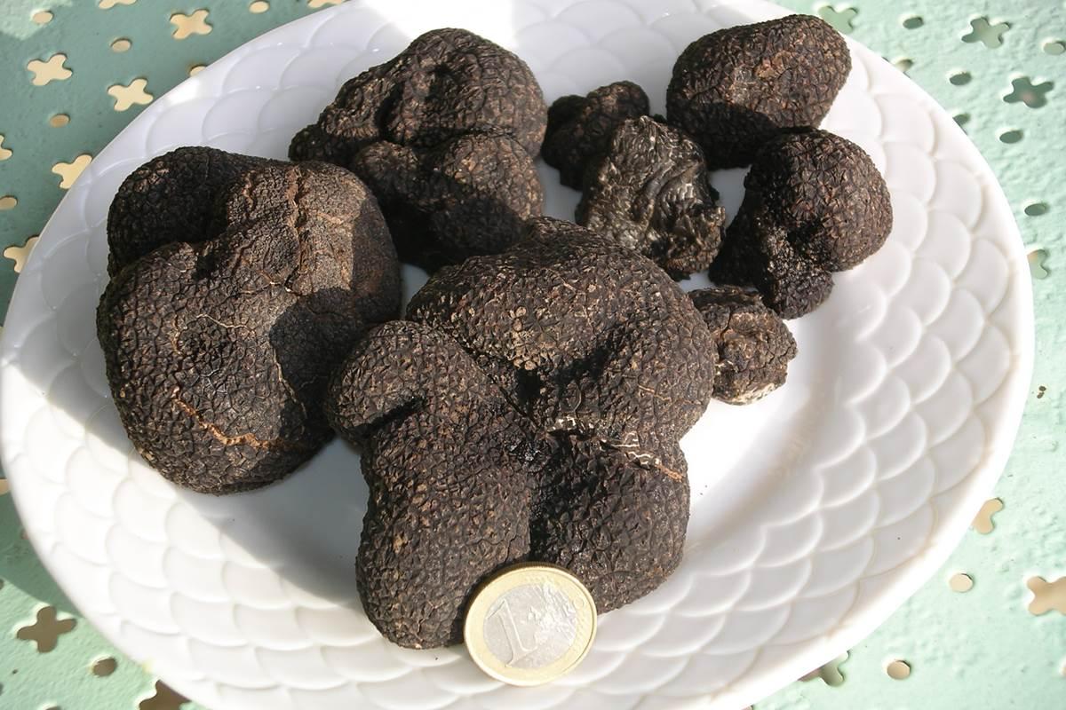 truffes-chambres-d-hotes-perigord-feuillantines