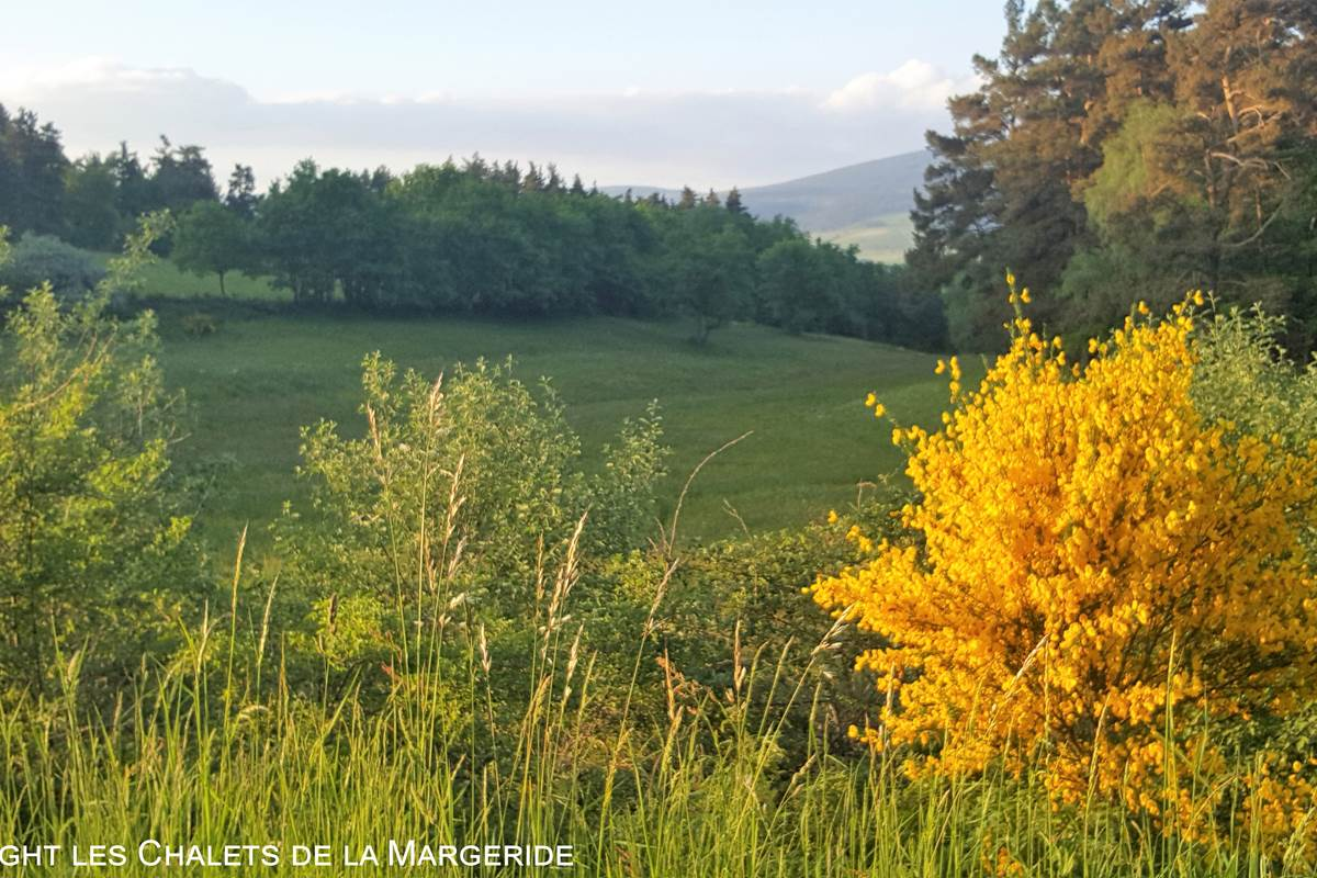 Les Chalets de la Margeride Paysage prairie