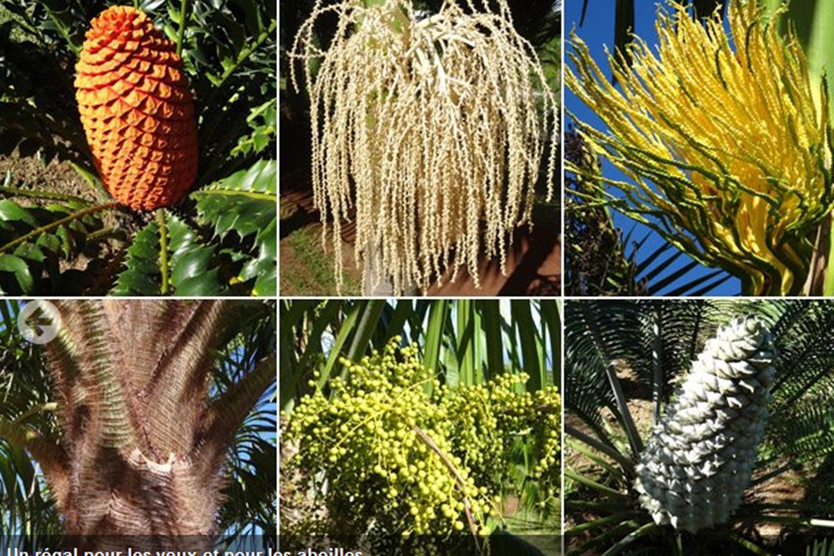 Screenshot-2018-3-26 Une agréable balade dans le Parc des Palmiers de Trois Mares(5)
