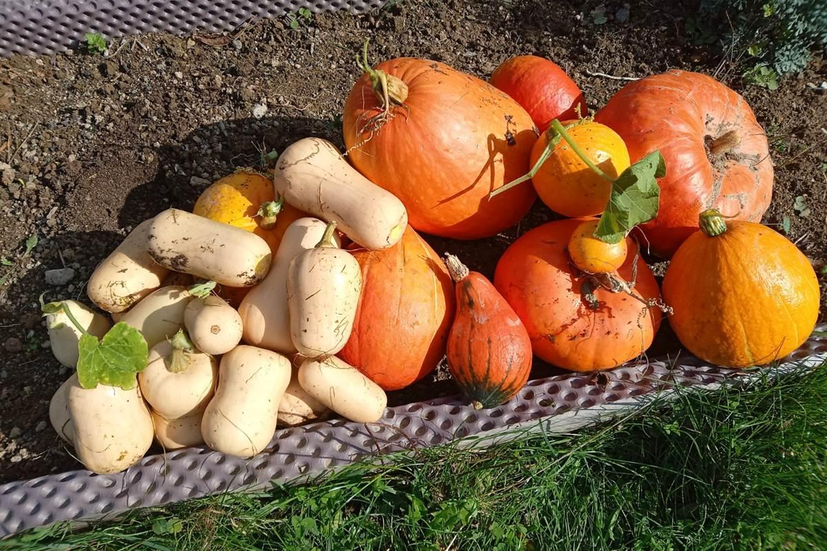 Le Répit de l'Oust - Les récoltes