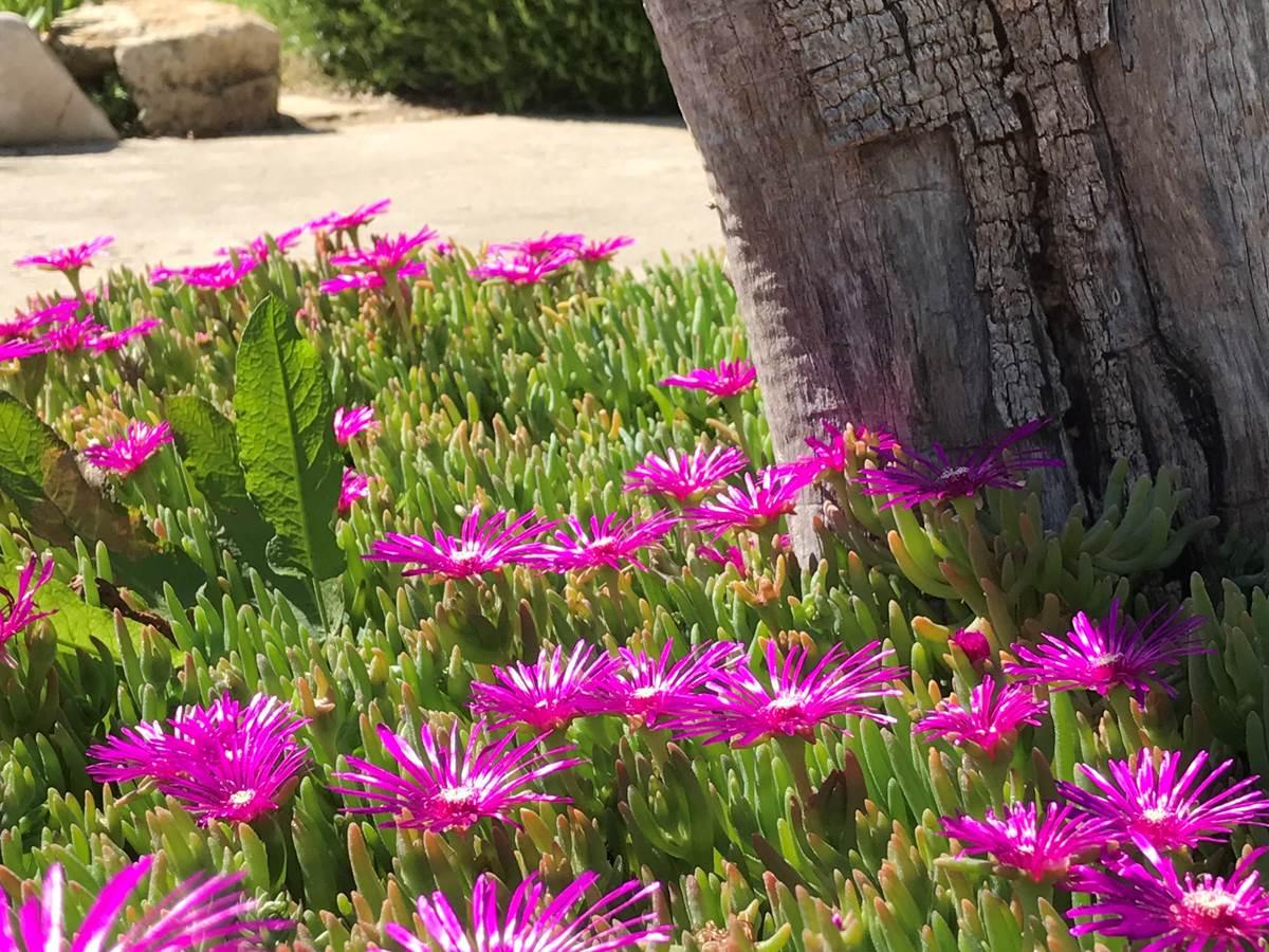 Tapis floral