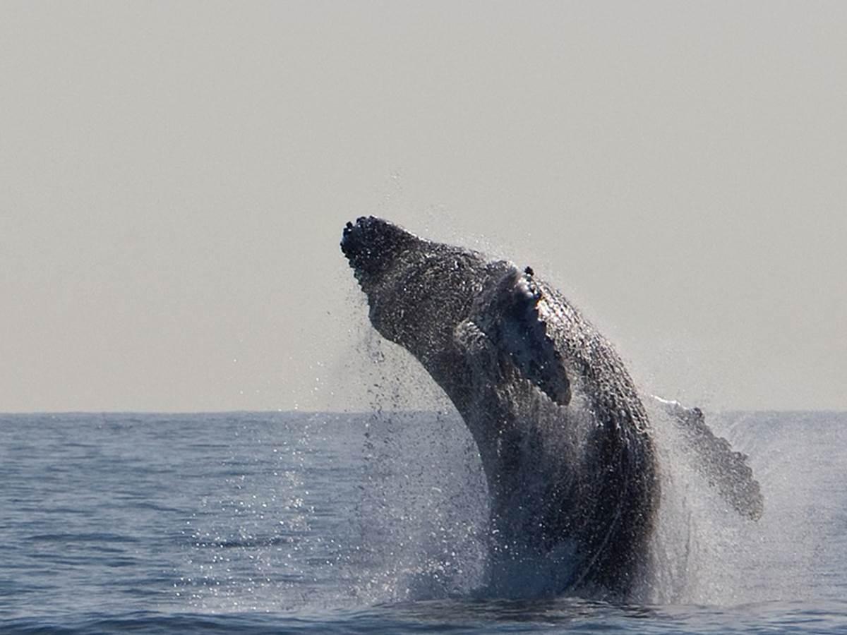A la découverte des baleines