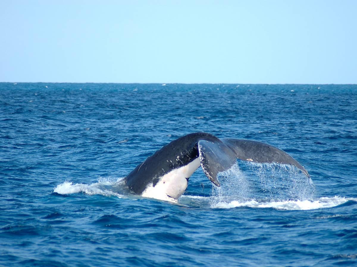 baleine 4
