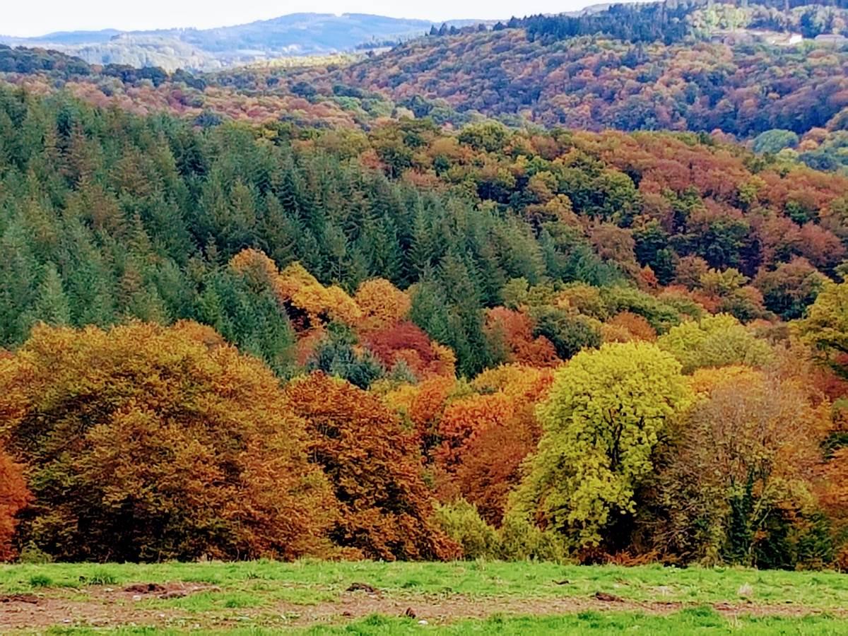 feuillages et couleurs d'automne devant Le Ranch des Lacs 87120