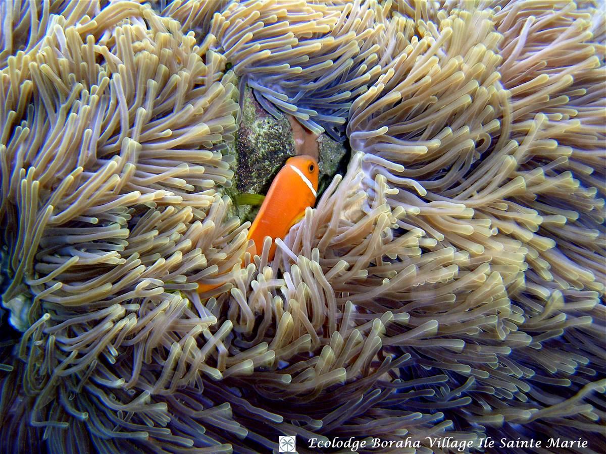 Faune Marine Boraha VIllage Ile Ste Marie Madagascar 04