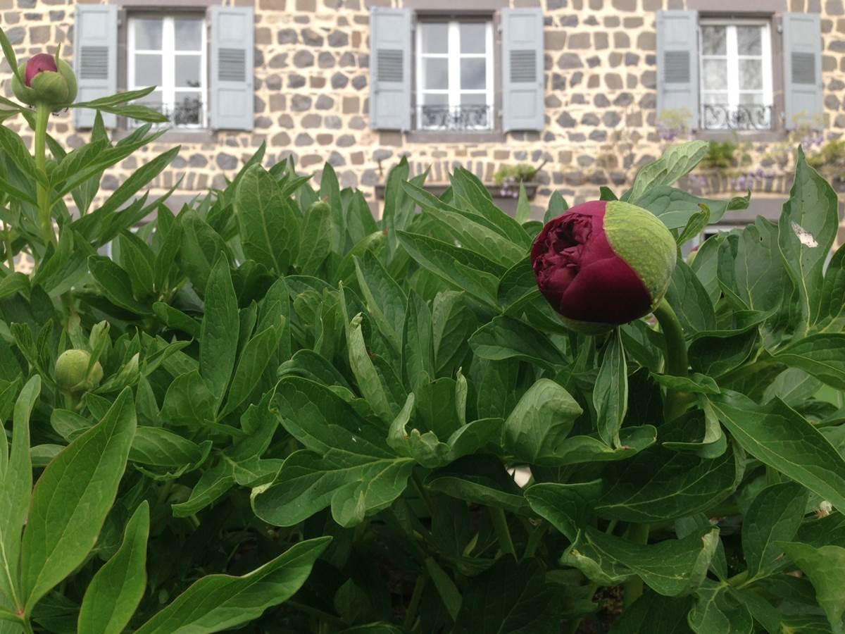 Les jardins d'Anna  Maison & Jardin