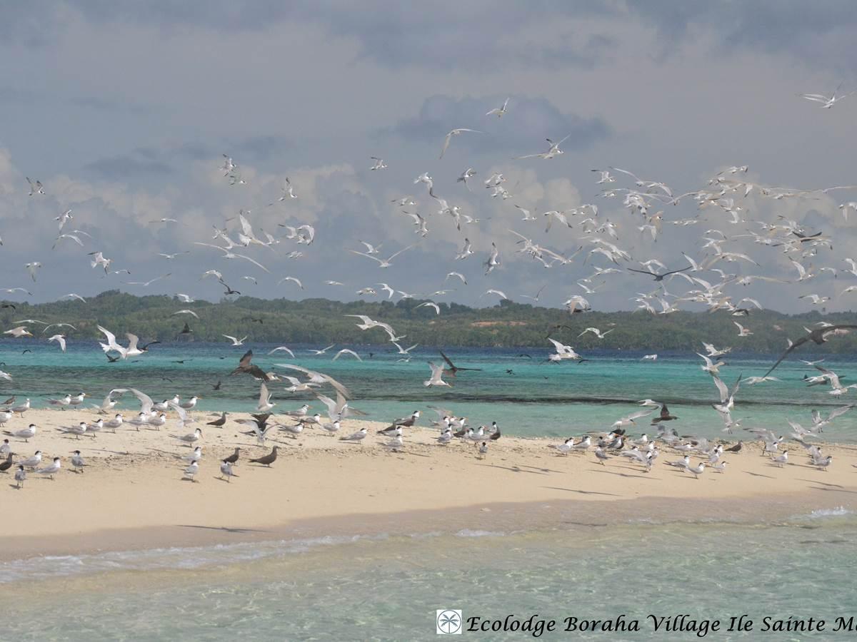 Ilöts de Sable Ile Ste Marie Madagascar 21