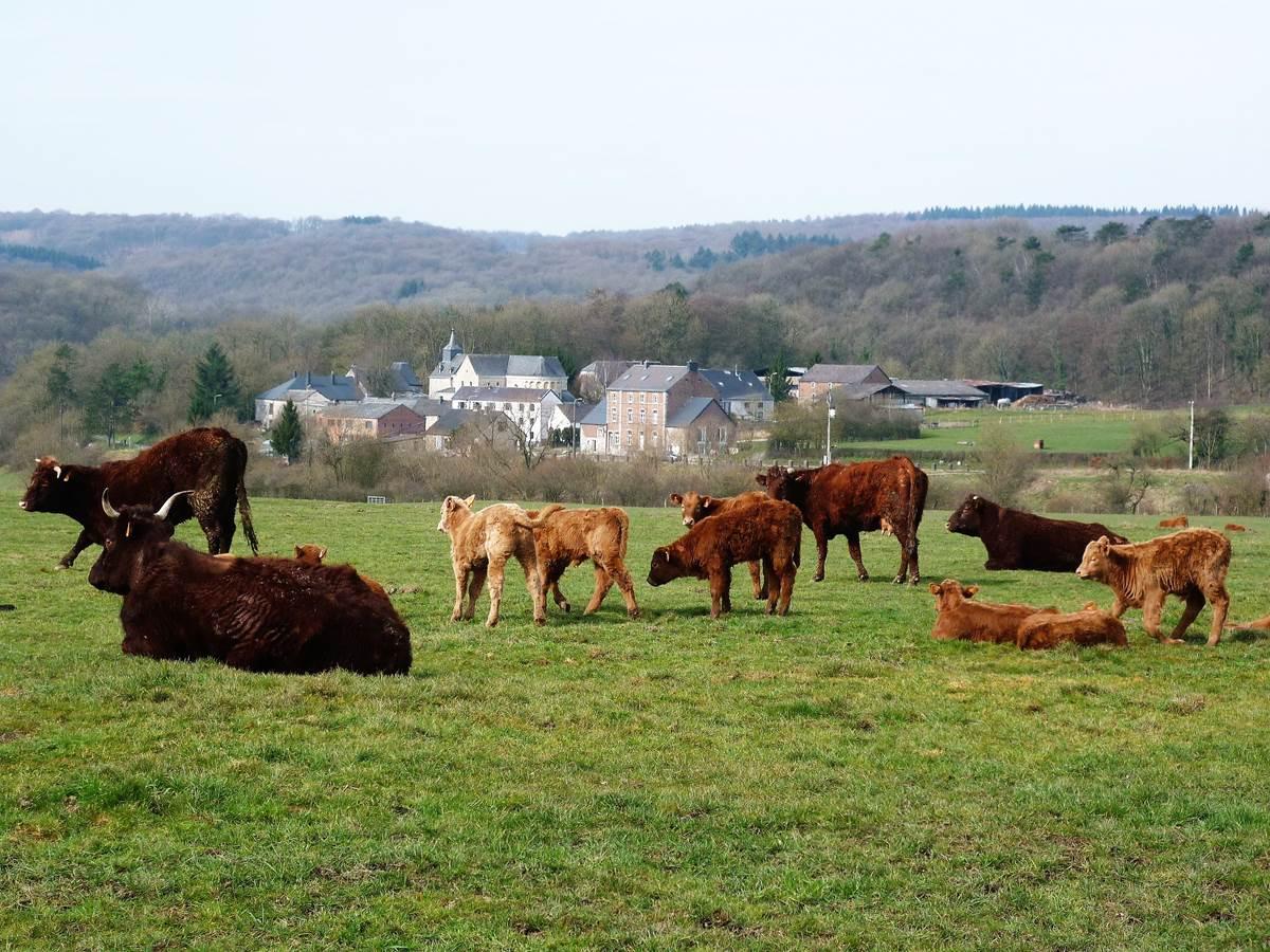 Le hameau rural de Xhignesse logé dans la verdure