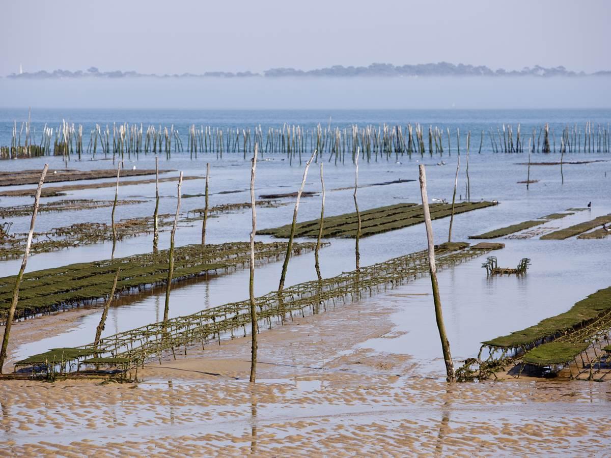 Parc à huîtres au large du Cap-Ferret