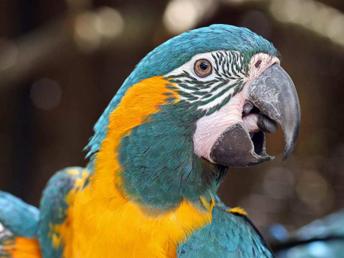 Ara +á Gorge Bleue du Parc des oiseaux