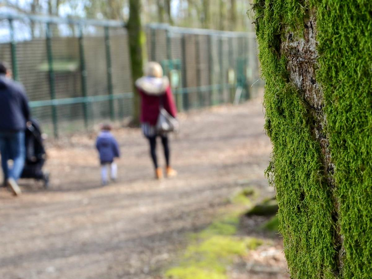 parc a gibier - La Roche-en-Ardenne