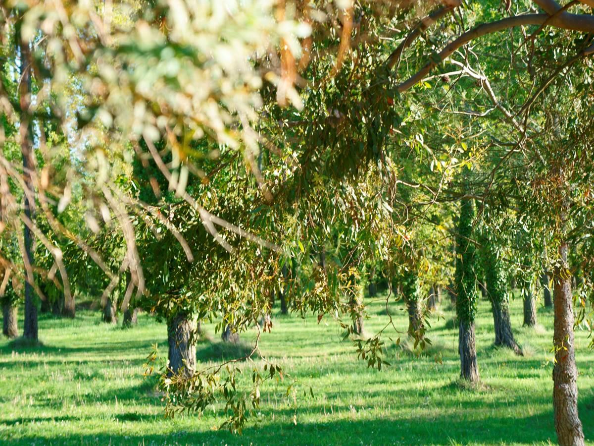 Parc hotel residence les peupliers loriol du comtat provence ventoux