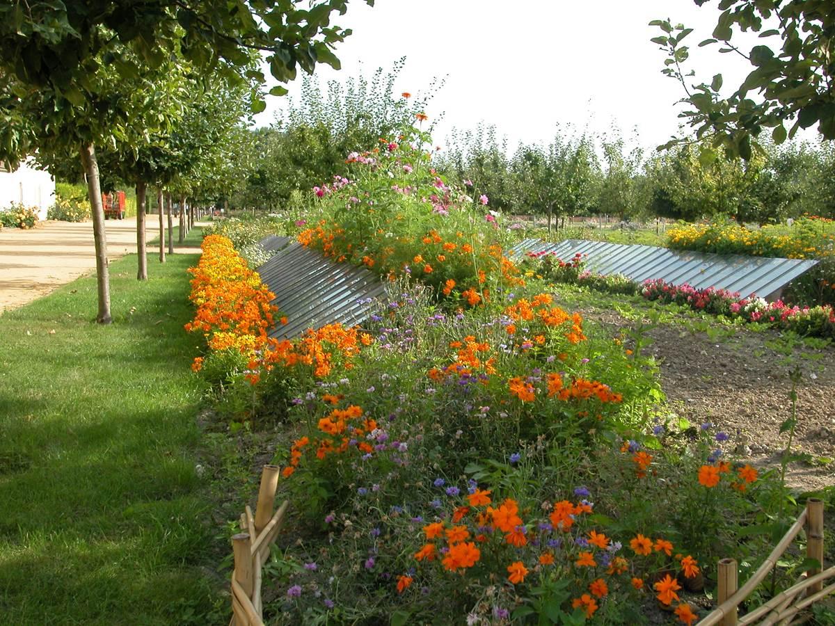 544446895 Le Château de la roche Guyon et son jardin