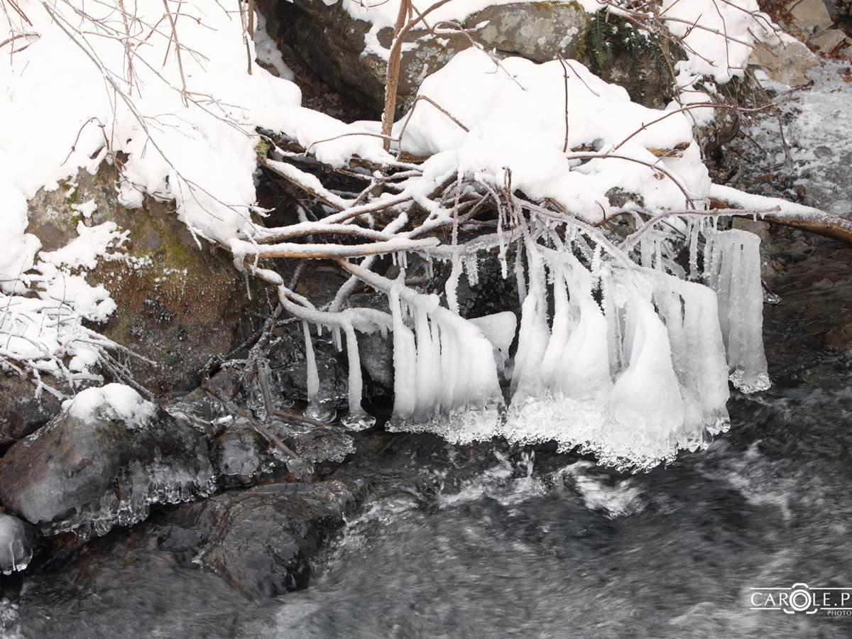 beauté de la nature en hiver à iraty