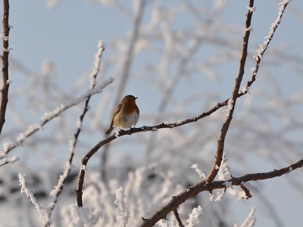 bird-1142065_1920