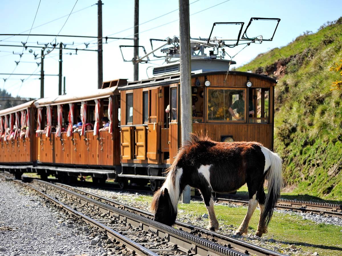 Petit train de la Rhune et Pottok, robuste poney basque vivant en liberté