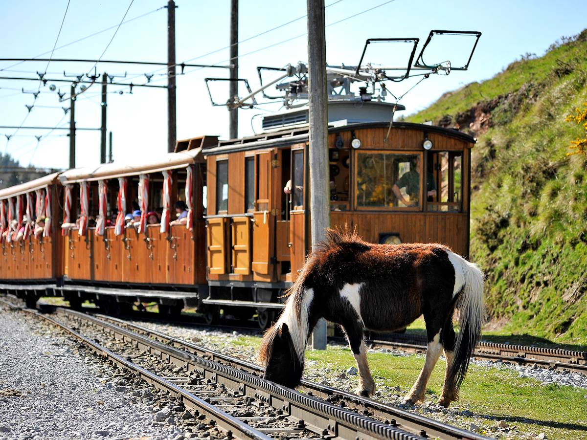 Petit train de la Rhune et Pottok, robuste poney basque vivant en liberté
